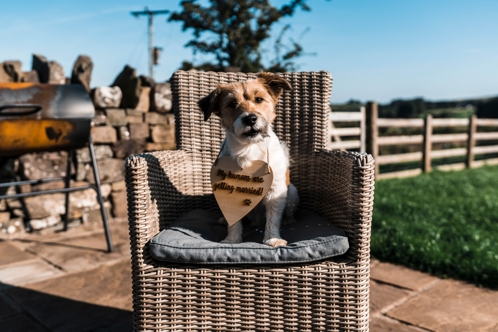 """A dog on a chair with a sign on him saying """"my humans are getting married"""""""