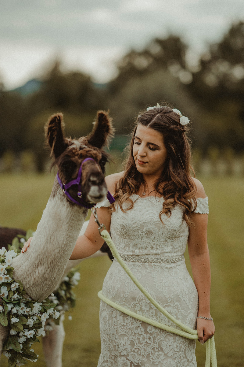 Bride is pictured with a lama, outdoor rustic wedding